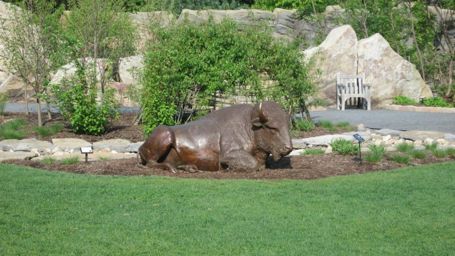 The Bison Statue at the Botanical Gardens at Penn State